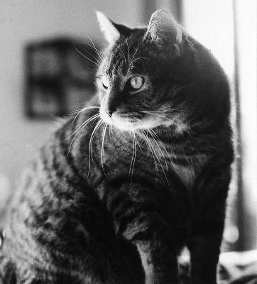 Finny the cat